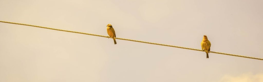 two birds balancing on wire